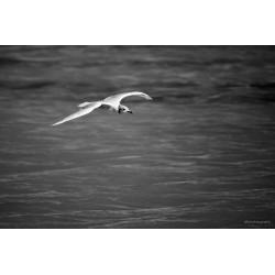 Vol au dessus des flots